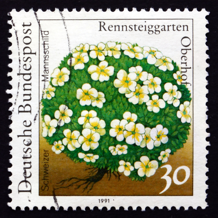helvetica: GERMANY - CIRCA 1991: a stamp printed in the Germany shows Androsace, Androsace Helvetica, Schweizer Mannschild, Flowering Plant, circa 1991