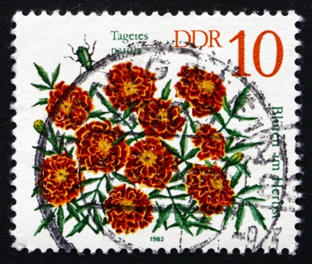 patula: GDR - CIRCA 1982: a stamp printed in GDR shows Student Flowers, Tagetes Patula, Autumn Flower, circa 1982