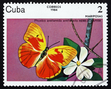 cuba butterfly: CUBA - CIRCA 1984: a stamp printed in the Cuba shows Red-Splashed Sulphur, Phoebis Avellaneda, Endemic Species of Butterfly Found Only in Cuba, circa 1984