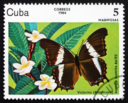 cuba butterfly: CUBA - CIRCA 1984: a stamp printed in the Cuba shows Victorina, Amphirene Superba, Butterfly, circa 1984
