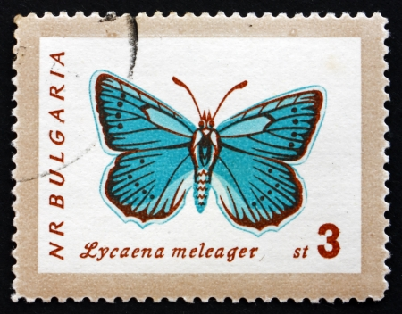 lycaena: BULGARIA - CIRCA 1962: a stamp printed in the Bulgaria shows Meleager�s Blue, Lycaena Meleager, Butterfly, circa 1962