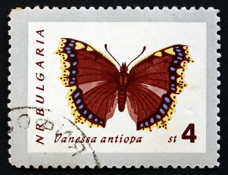 vanessa: BULGARIA - CIRCA 1962: a stamp printed in the Bulgaria shows Mourning Cloak, Vanessa Antiopa, Butterfly, circa 1962