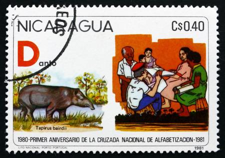 illiteracy: NICARAGUA - CIRCA 1981: un sello impreso en Nicaragua muestra Lucha contra el Analfabetismo, Bairds Tapir Tapirus Bairdii, alrededor de 1975 Editorial