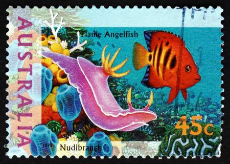 AUSTRALIA - CIRCA 1995: a stamp printed in the Australia shows Nudibranch, Marine Gastropod Mollusk, circa 1995