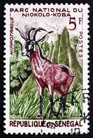 SENEGAL - CIRCA 1960: a stamp printed in Senegal shows Roan Antelope, Hippotragus Equinus, Savanna Antelope, circa 1960