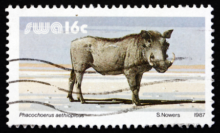 SOUTH WEST AFRICA - CIRCA 1987: a stamp printed in South West Africa shows Warthog, Phacochoerus Aethiopicus, Wild Pig, circa 1987