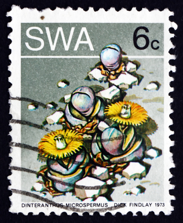 SOUTH WEST AFRICA - CIRCA 1973: a stamp printed in South West Africa shows Stone Plant, Dinteranthus Microspermus, Succulent Plant, circa 1973