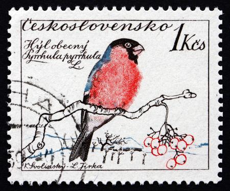 passerine: CECOSLOVACCHIA - CIRCA 1959: un francobollo stampato in Cecoslovacchia mostra Ciuffolotto comune, Pyrrhula Pyrrhula, uccello passeriforme, circa 1959