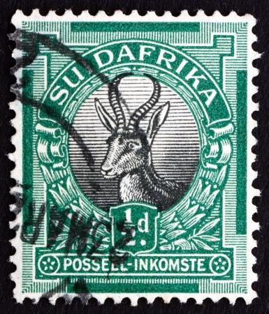 antidorcas: SOUTH AFRICA - CIRCA 1936: a stamp printed in South Africa shows Springbok, Antidorcas Marsupialis, Antelope, circa 1936 Editorial