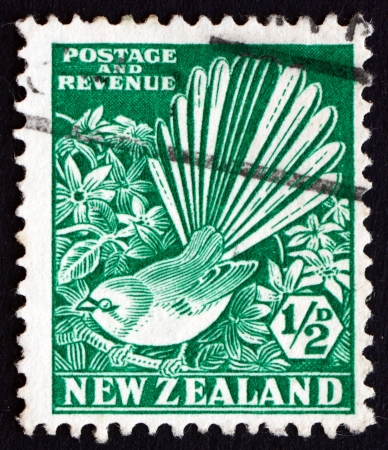 fantail: NEW ZEALAND - CIRCA 1935: a stamp printed in the New Zealand shows Pied Fantail and Clematis, circa 1935