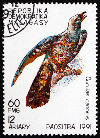 canorus: MALAGASY - CIRCA 1991: a stamp printed in Malagasy, Madagascar shows Common Cuckoo, Cuculas Canorus, Bird, circa 1991