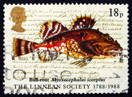 GREAT BRITAIN - CIRCA 1988: a stamp printed in the Great Britain shows Bull-rout Fish, Myoxocephalus Scorpius, Linnean Society of London, 200th Anniversary, circa 1988