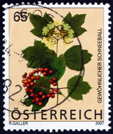 guelder: AUSTRIA - CIRCA 2007  a stamp printed in the Austria shows Guelder Rose, Viburnum Opulus, Flowering Plant, circa 2007 Editorial