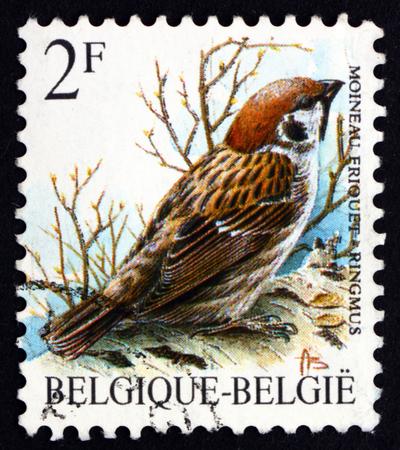 passerine: BELGIO - CIRCA 1989: un francobollo stampato in Belgio mostra Passera mattugia, Passer Montanus, uccello passeriforme, circa 1989