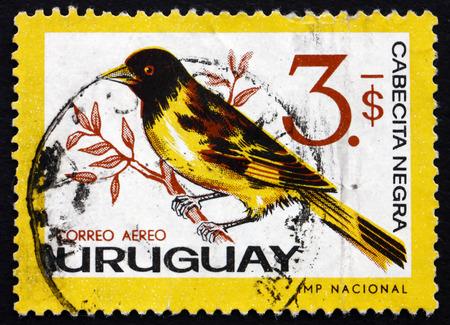passerine: URUGUAY - CIRCA 1963: un francobollo stampato in Uruguay mostra con cappuccio Lucherino, Carduelis Magellanica, uccello passeriforme, circa 1963