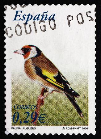 passerine: SPAGNA - CIRCA 2006: un francobollo stampato in Spagna mostra Cardellino, Carduelis Carduelis, uccello passeriforme, circa 2006