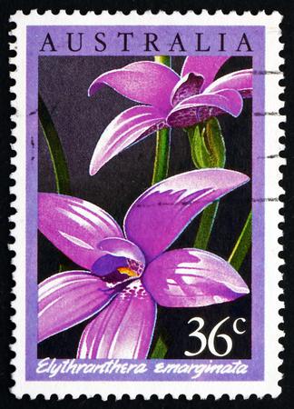 notched: AUSTRALIA - CIRCA 1986: a stamp printed in the Australia shows The Notched Elythranthera, Elythranthera Emarginata, Orchid, circa 1986 Editorial