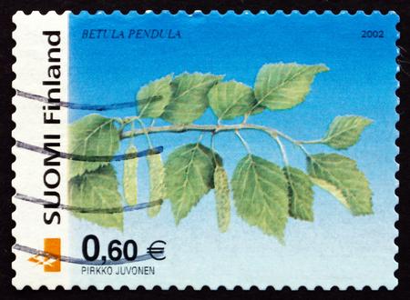 betula pendula: FINLANDIA - CIRCA 2002: un francobollo stampato in Finlandia mostra Silver Birch, Betula pendula, Albero, intorno al 2002