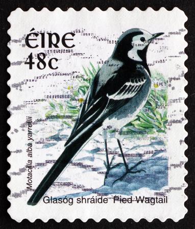passerine: IRLANDA - CIRCA 1998: un francobollo stampato in Irlanda mostra Pied ballerina, Motacilla Alba yarrellii, uccello passeriforme, circa 1998