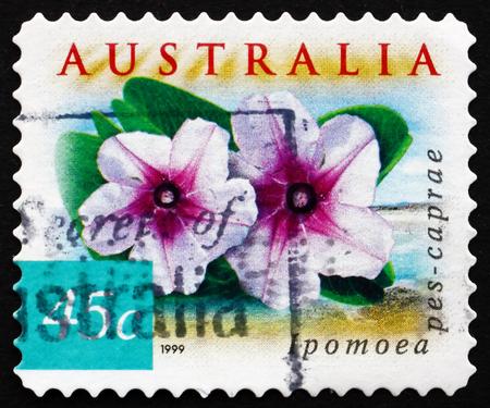 pes caprae: AUSTRALIA - CIRCA 1999: a stamp printed in the Australia shows Beach Morning Glory, Ipomoea Pes-caprae, Common Pantropical Creeping Vine, circa 1999 Editorial