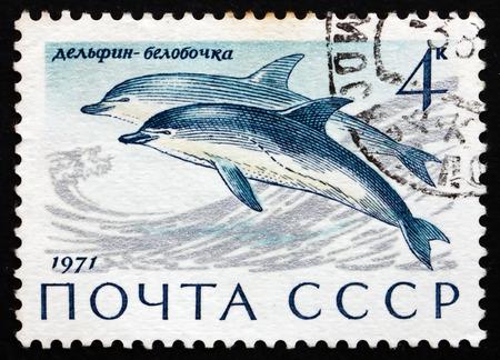 sea mammal: RUSSIA - CIRCA 1971: a stamp printed in the Russia shows Common Dolphins, Delphinus Delphis, Sea Mammal, circa 1971