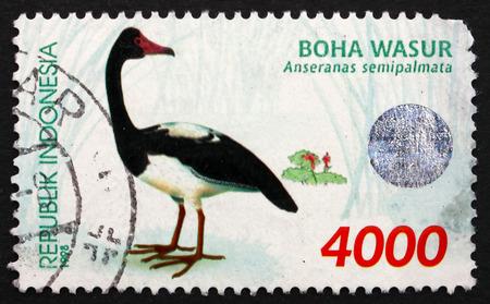 waterbird: INDONESIA - CIRCA 1998  a stamp printed in Indonesia shows Magpie Goose, Anseranas Semipalmata, Waterbird, circa 1998