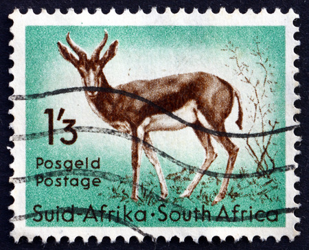 marsupialis: SOUTH AFRICA - CIRCA 1954: a stamp printed in South Africa shows Springbok, Antidorcas Marsupialis, Antelope, circa 1954