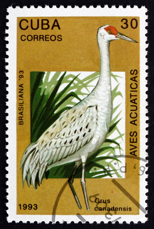 sandhill crane: CUBA - CIRCA 1993: a stamp printed in the Cuba shows Sandhill Crane, Grus Canadensis, Bird, circa 1993