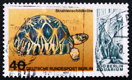 radiated: GERMANY - CIRCA 1977: a stamp printed in the Germany, Berlin shows Radiated Tortoise, Astrochelys Radiata, 25th Anniversary of the Reopening of Berlin Aquarium, circa 1977