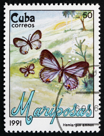 cuba butterfly: CUBA - CIRCA 1991: a stamp printed in the Cuba shows Nickerbean Blue, Hemiargus Ammon, Butterfly, circa 1991 Editorial