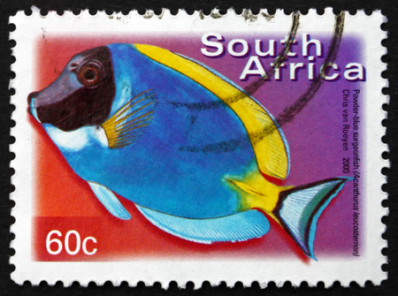 acanthurus leucosternon: SOUTH AFRICA - CIRCA 2000: a stamp printed in South Africa shows Powder-blue Surgeonfish, Acanthurus Leucosternon, Marine Tropical Fish, circa 2000 Editorial