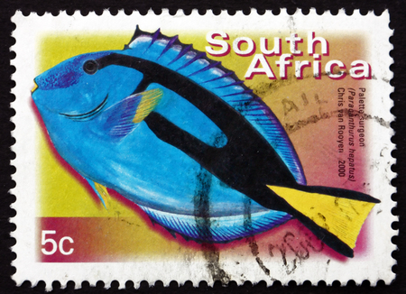 hepatus: SOUTH AFRICA - CIRCA 2000: a stamp printed in South Africa shows Palette Surgeonfish, Paracanthurus Hepatus, Marine Tropical Fish, circa 2000