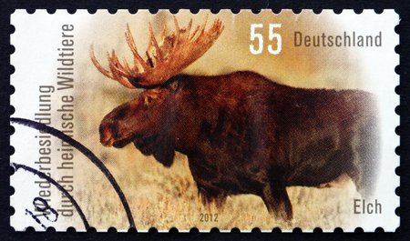 extant: GERMANY - CIRCA 2012: a stamp printed in the Germany shows Moose, Alces Alces, is the Largest Extant Species in the Deer Family, circa 2012 Editorial
