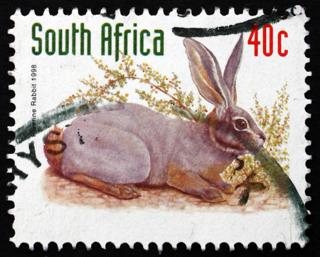 riverine: SOUTH AFRICA - CIRCA 1998: a stamp printed in South Africa shows Riverine Rabbit, Bunolagus Monticularis, is one of Most Endangered Mammals in the World, circa 1998