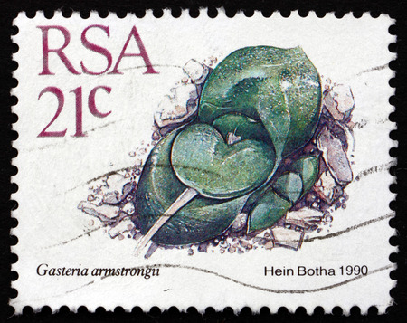 cow tongue: SOUTH AFRICA - CIRCA 1988: a stamp printed in South Africa shows Cow Tongue, Gasteria Armstrongii, Dwarf Succulent Plant, circa 1988