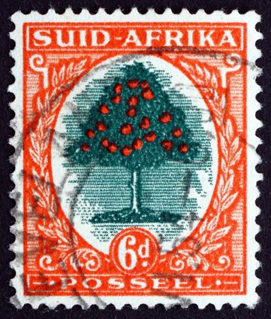 naranja arbol: Sud�frica - alrededor de 1941: un sello impreso en Sud�frica muestra Naranjo, alrededor del a�o 1941