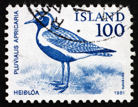 pluvialis: ICELAND - CIRCA 1981: a stamp printed in the Iceland shows Golden Plover, Pluvialis Apricaria, Bird, circa 1981 Editorial
