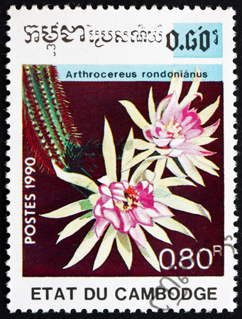 cactus species: CAMBODIA - CIRCA 1990: a stamp printed in Cambodia shows Arthrocereus Rondonianus, is a Species of Cactus Endemic to Brazil, circa 1990