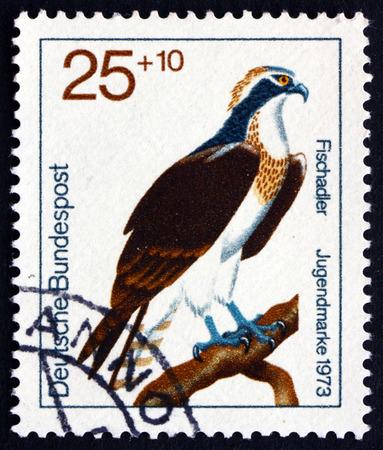bird osprey: GERMANY - CIRCA 1973: a stamp printed in the Germany shows Osprey, Pandion Haliaetus, Bird of Prey, circa 1973