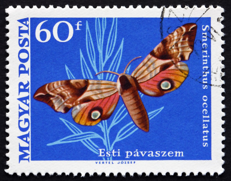 ocellatus: HUNGARY - CIRCA 1969: a stamp printed in the Hungary shows Eyed Hawk Moth, Smerinthus Ocellatus, European Moth, circa 1969