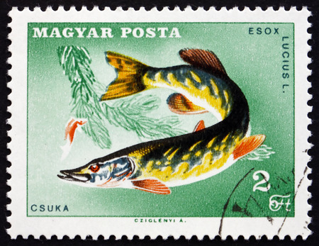northern pike: HUNGARY - CIRCA 1967: a stamp printed in the Hungary shows Northern Pike, Esox Lucius, Carnivorous Fish, circa 1967