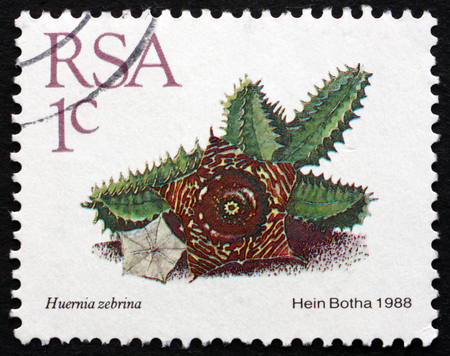 SOUTH AFRICA - CIRCA 1988: a stamp printed in South Africa shows Huernia Zebrina, Succulent Plant, circa 1988