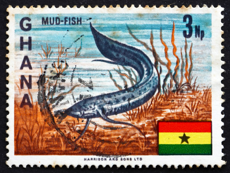 lungfish: GHANA - CIRCA 1967: a stamp printed in Ghana shows West African Lungfish, Protopterus Annectens, Freshwater Fish, circa 1967 Editorial