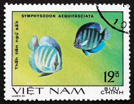 aequifasciatus: VIETNAM - CIRCA 1981: a stamp printed in Vietnam shows Blue Discus, Symphysodon Aequifasciata, Fish, circa 1981