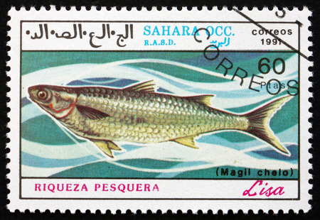 grey mullet: SAHARA - CIRCA 1991: a stamp printed in Sahrawi Arab Democratic Republic shows Grey Mullet, Liza, Marine Fish, circa 1991