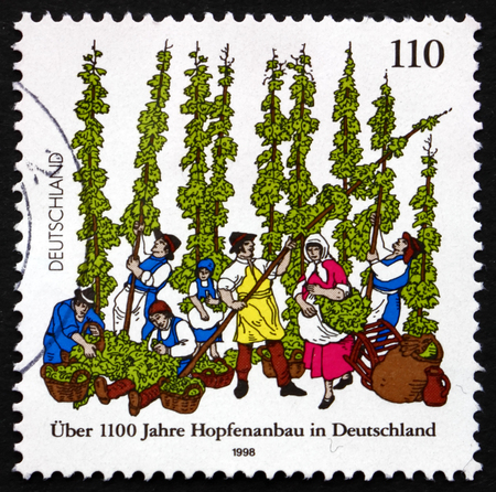 hopfield: GERMANY - CIRCA 1998: a stamp printed in the Germany shows German Cultivation of Hops, Female Flowers of the Hop Plant, Humulus Lupulus, circa 1998