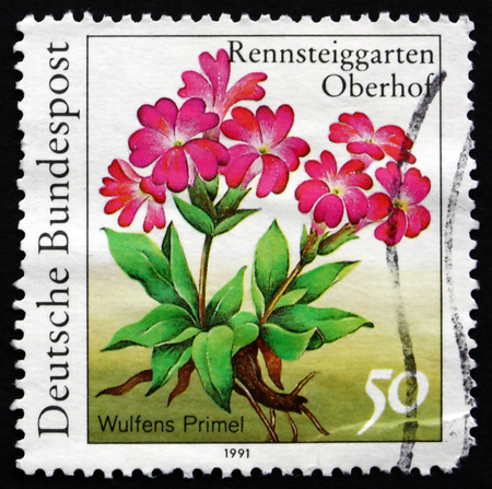 herbaceous  plant: GERMANY - CIRCA 1991: a stamp printed in the Germany shows Wulfens Primel, Primula Wulfeniana, Herbaceous Plant, circa 1991