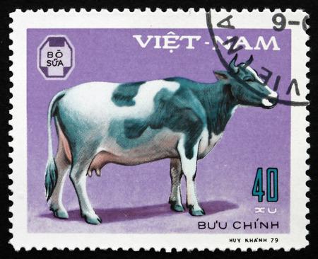 domestic animal: VIETNAM - CIRCA 1979: a stamp printed in Vietnam shows Cow, Domestic Animal, circa 1979 Editorial
