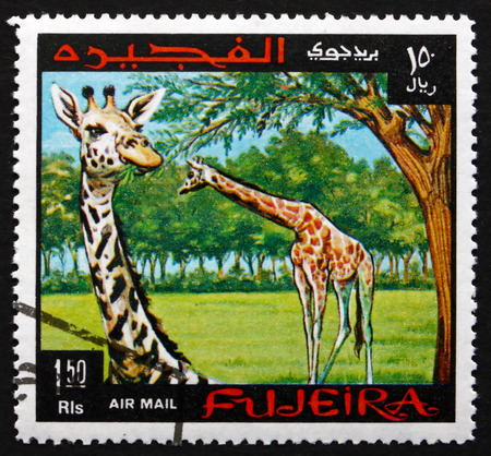 fujeira: FUJEIRA - CIRCA 1969: a stamp printed in the Fujeira shows Giraffe, Giraffa Camelopardalis, the Tallest Living Terrestrial Animal, circa 1969 Editorial