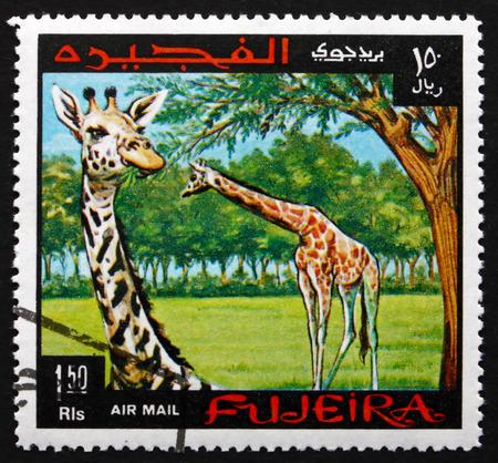 FUJEIRA - CIRCA 1969: a stamp printed in the Fujeira shows Giraffe, Giraffa Camelopardalis, the Tallest Living Terrestrial Animal, circa 1969 Editorial
